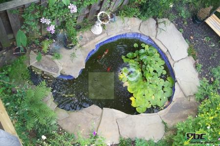 Koi Pond Day